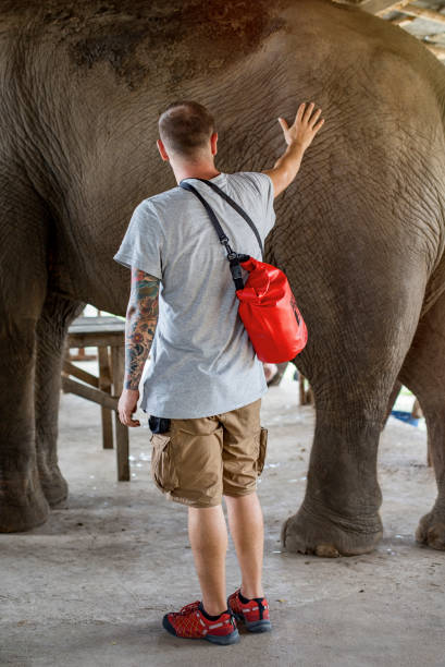 A young man is standing and touches a big asian elephant in Kanchanaburi, Thailand stock photo