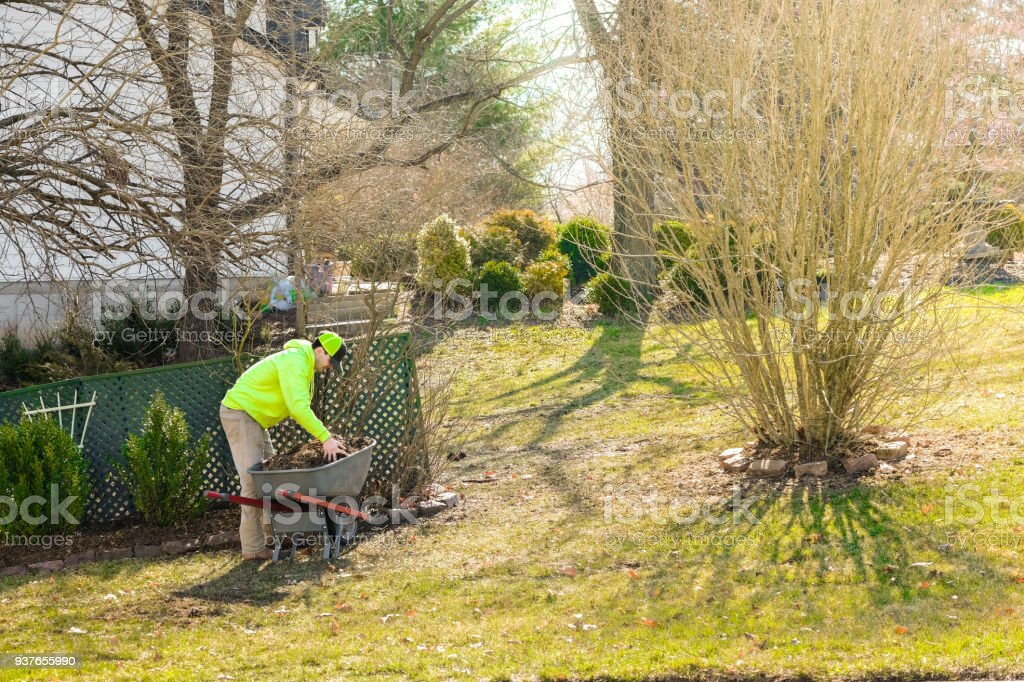 Young man mulching flower beds stock photo