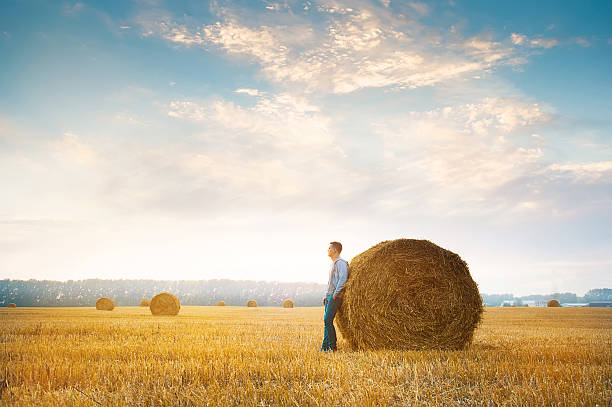 Young man near straw bales stock photo