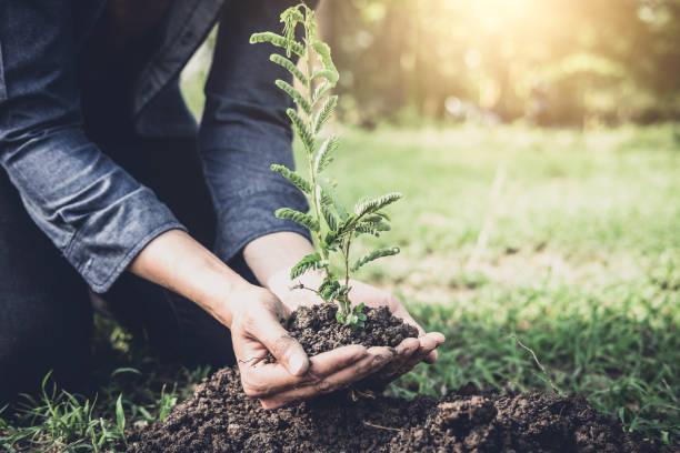 jongeman planten van de boom in de tuin als dag van de aarde en sla het concept van de wereld, natuur, milieu en ecologie - herbebossing stockfoto's en -beelden