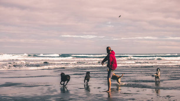 Young man playing to throw a stick to his dogs on the beach picture id1174504582?b=1&k=6&m=1174504582&s=612x612&w=0&h=ivulf6mwlo zerijuzmrxrvkmvcq bukqunl4ad3jms=