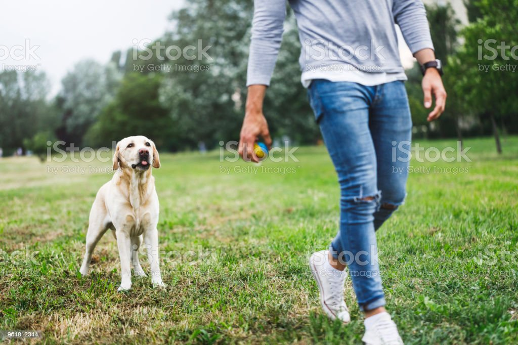 Young man playing with his dog in nature royalty-free stock photo