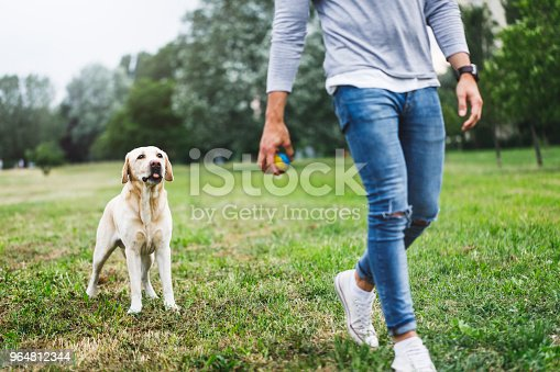 Young Man Playing With His Dog In Nature Stock Photo & More Pictures of 30-34 Years