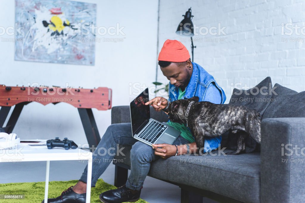 Young man showing laptop screen to cute French bulldog stock photo