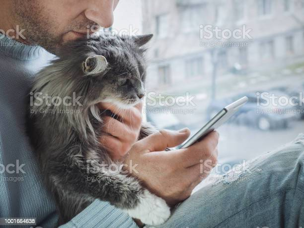Young man sits on the windowsill holds kitten on his lap and reads picture id1001664638?b=1&k=6&m=1001664638&s=612x612&h=7o0bn3jodthb3e5yufytzhkm7qhfrtmeladzwfqlkwi=