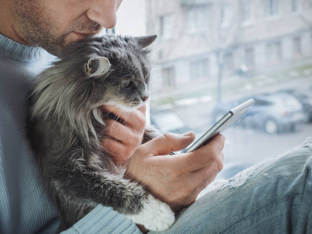 Young man sits on the windowsill, holds kitten on his lap and reads news Young man sits on the windowsill, holds a beautiful, fluffy kitten on his lap and reads news on his mobile phone undomesticated cat stock pictures, royalty-free photos & images