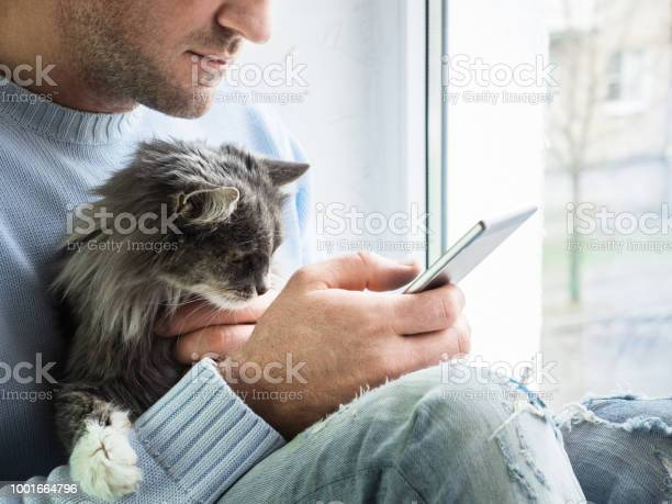 Young man sits on the windowsill holds kitten on his lap and reads picture id1001664796?b=1&k=6&m=1001664796&s=612x612&h=tzwv7xbstrylzdtxgog5i10yf1gy9b6lwkielrn6 8e=