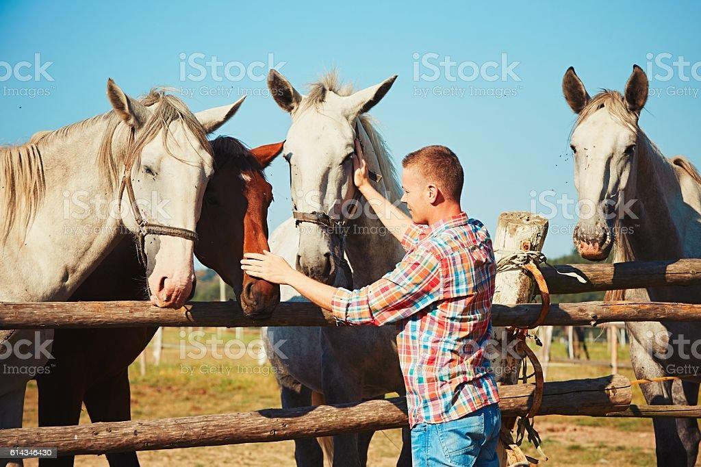 Young man stroking horses stock photo