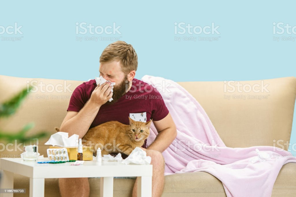 Young man suffering from allergy to cat hair. Having skin rash,...