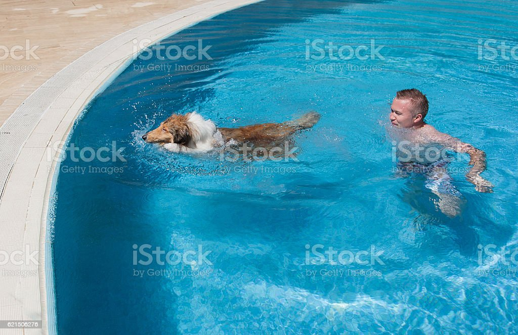 Young man teaching collie dog to swim in blue pool photo libre de droits