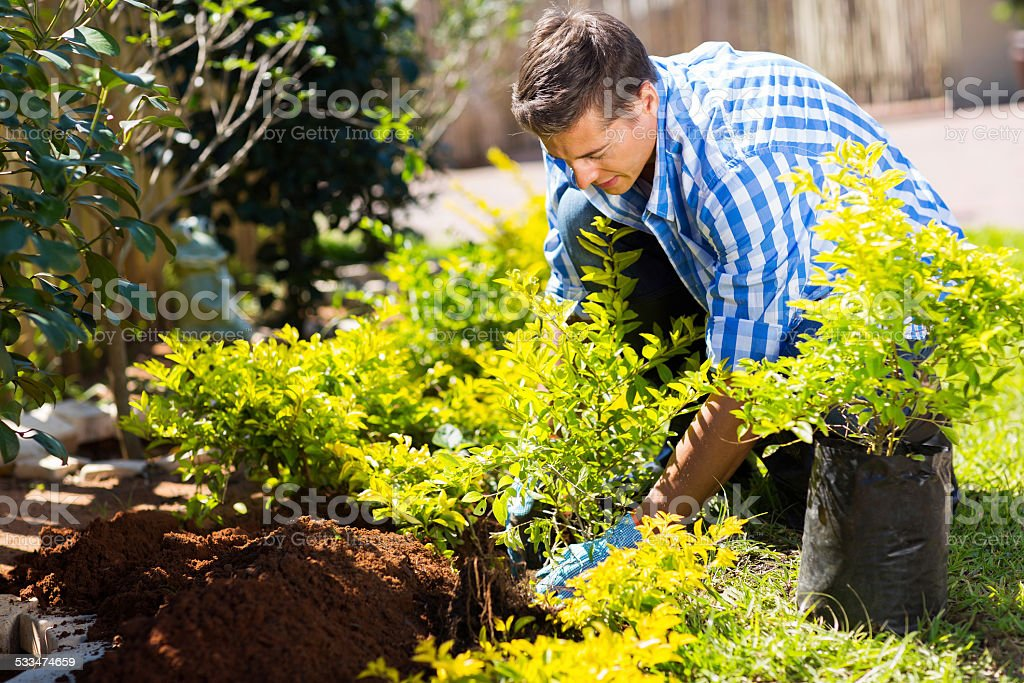 young man transplanting a new plant stock photo