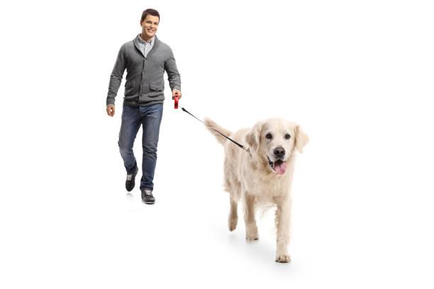 Young man walking a dog picture id878346194?b=1&k=6&m=878346194&s=612x612&w=0&h=k4bfufhsxbx vkhxxal0x7xtxdsoruu95v95uakfzcs=