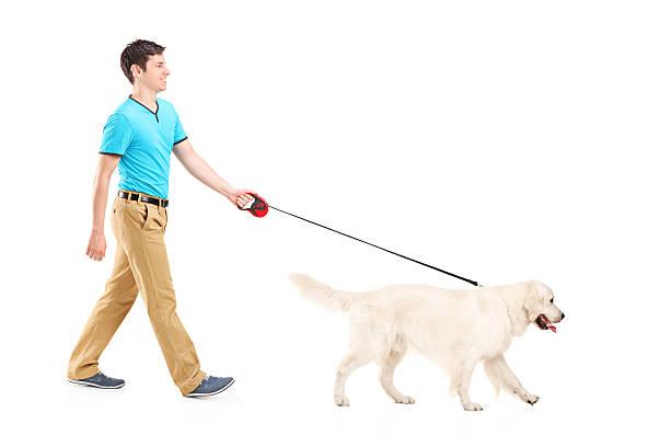 Young man walking a white retriever on a leash picture id177500512?b=1&k=6&m=177500512&s=612x612&w=0&h=mwxxxhu5cbf oylsl0  hkgwhaczdjxhdhmnerdjf y=