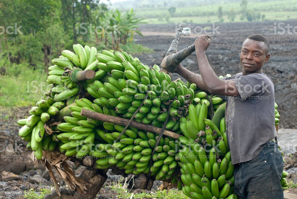 young man with a heavy load of bananas, eastern Congo stock photo