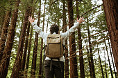 A young man standing with arms raised in the middle of a beautiful redwood forest