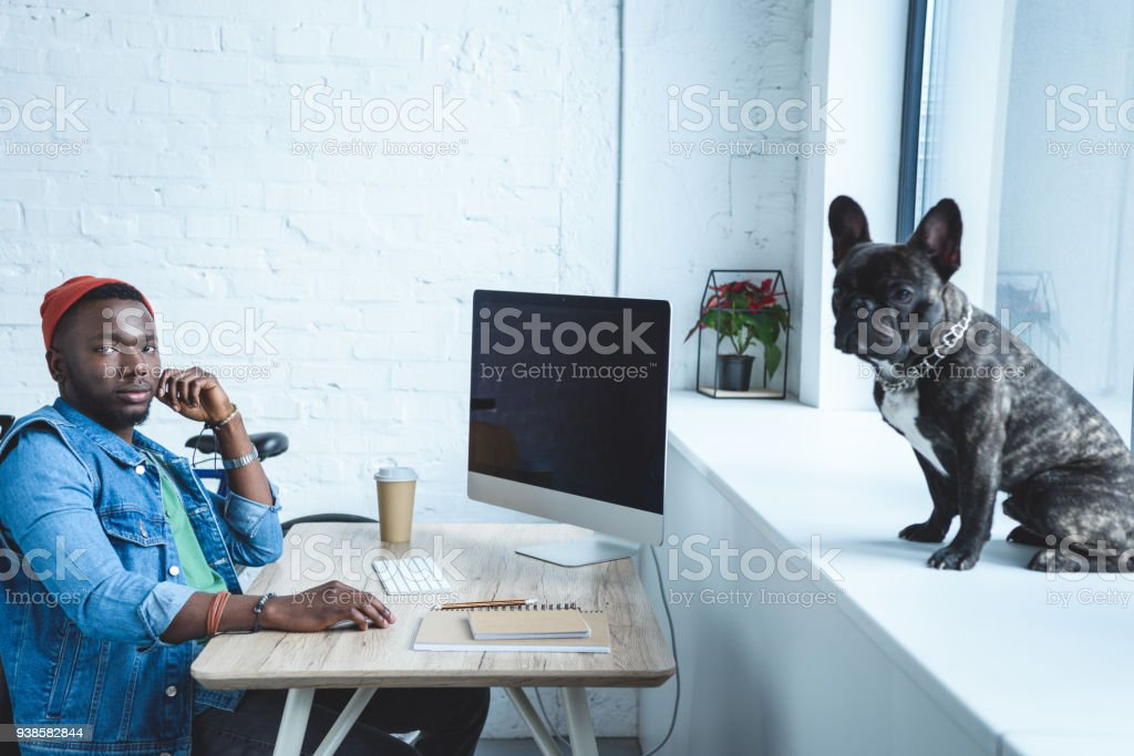 Young man working by computer while Frenchie dog sitting on windowsill stock photo