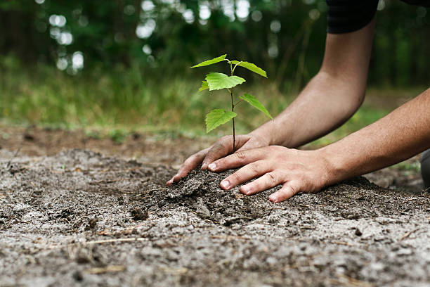 Young man's hands planting tree sapling Small plant in the ground with two hands around it.  The ground is wet and the background is out-of-focus greenery. potting stock pictures, royalty-free photos & images