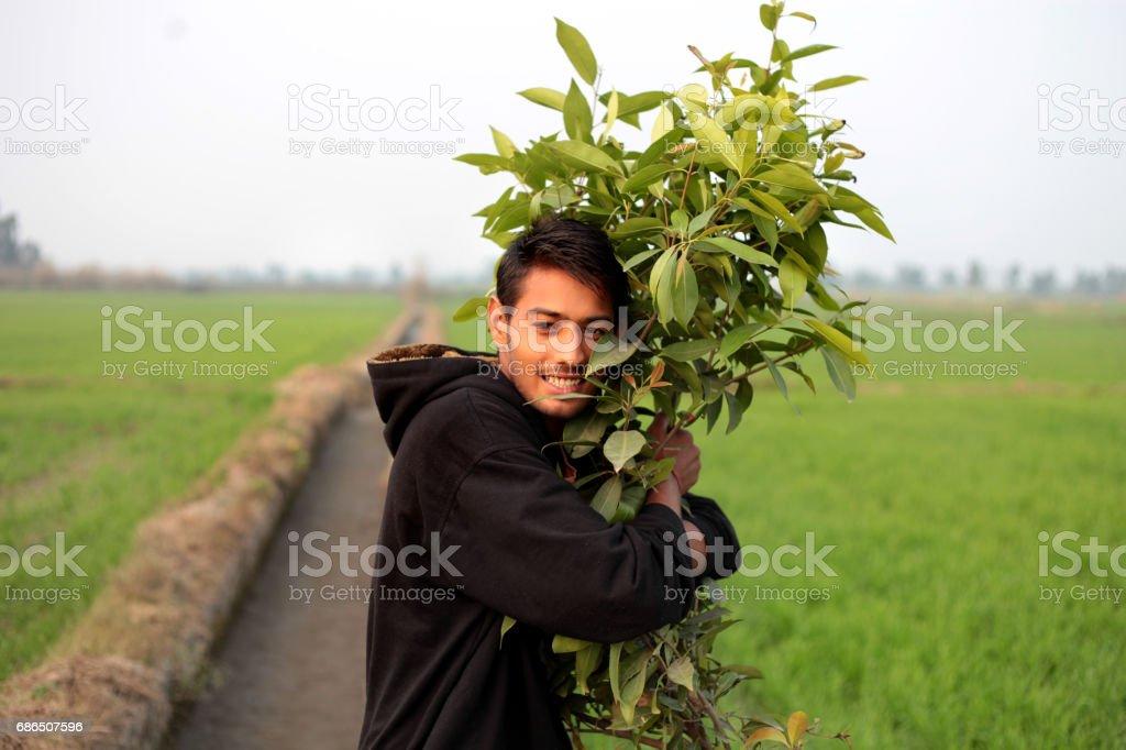 Unga män kramas träd royaltyfri bildbanksbilder