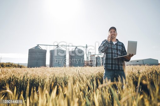 Young man farmer standing in the middle of the wheat field and use laptop. He talking to phone and control the harvest on his field in the summer morning. Plant protection and agribusiness concept