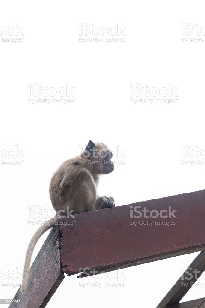 Junge Affen zeigt Panik sitzen auf Holzbalken. - Lizenzfrei Affe Stock-Foto