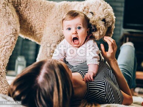 Young mother and baby girl play time in living room, on the floor. Family dog hanging around, licking the baby on the neck.