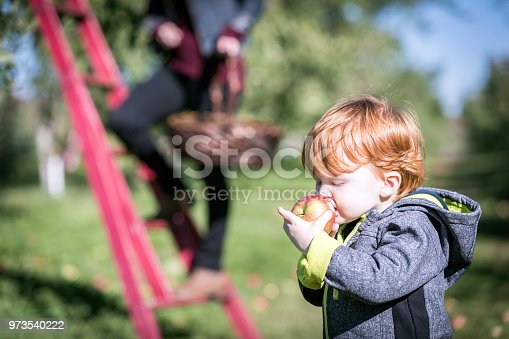 istock Young Mother and her Son Picking Apples in Orchard 973540222