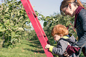 Young Mother and her Son Picking Apples and having fun in orchard
