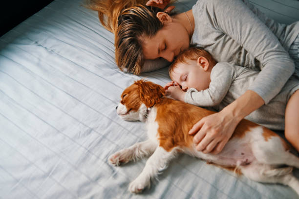 young mother taking a nap with her babies young mother enjoying napping with her baby and puppy bedtime stock pictures, royalty-free photos & images
