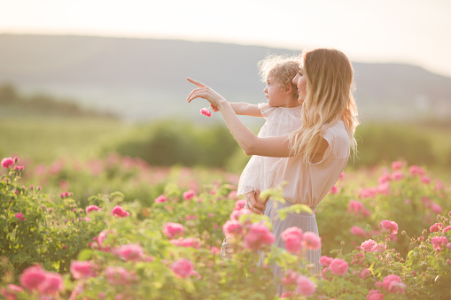 Young mother with her pretty curly daughter are walking in spring garden with pink blossom roses flowers, sunset time