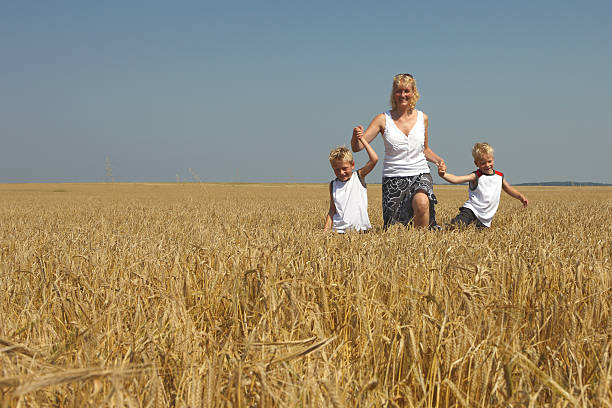 Young Mother With Twin Brothers Walking In Wheat stock photo