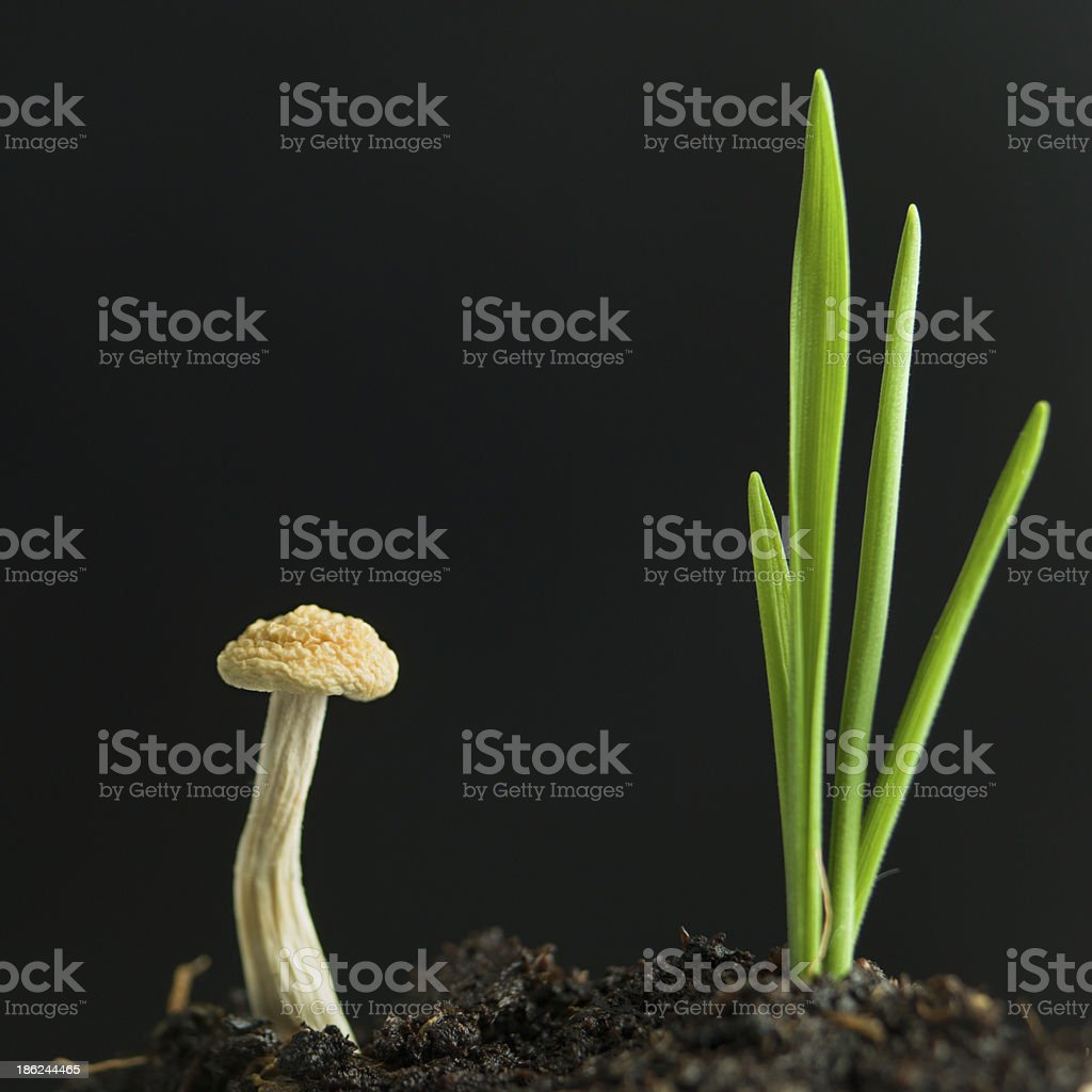 young mushroom and plant sprouting from soil royalty-free stock photo