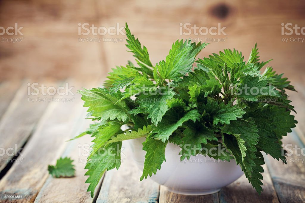 Young nettle leaves in pot on rustic background, urtica stock photo