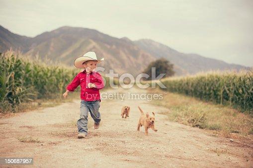 A young boy runs on the farm alongside his golden retriever pups.