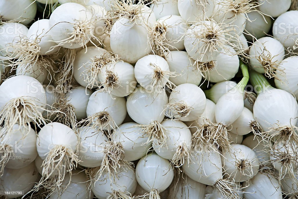 Young onion royalty-free stock photo