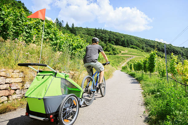 Young parent cycling through vineyards with bike trailer stock photo