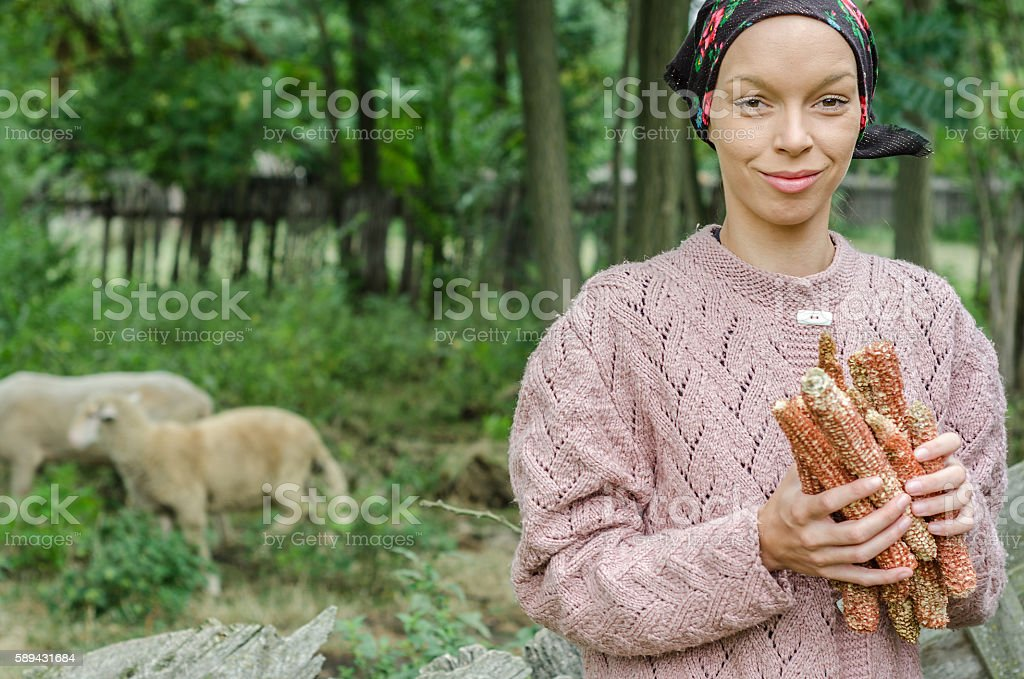 young peasant girl with a scarf collects corn stock photo