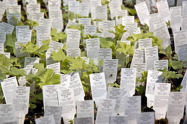 Young Perennials stock photo
