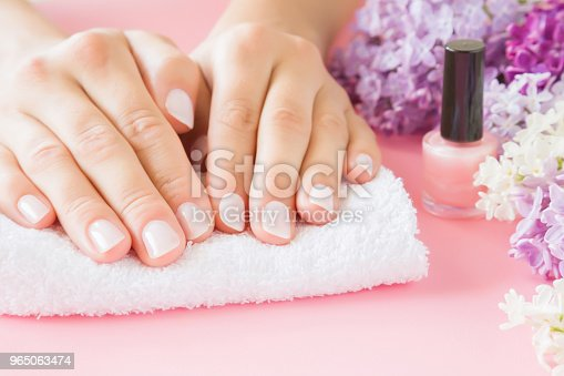 istock Young, perfect, groomed woman's hands on white towel. Nail varnishing in light pink color. Nails care. Manicure, pedicure beauty salon. Beautiful branches of lilac blossoms. Colorful, fresh flowers. 965063474