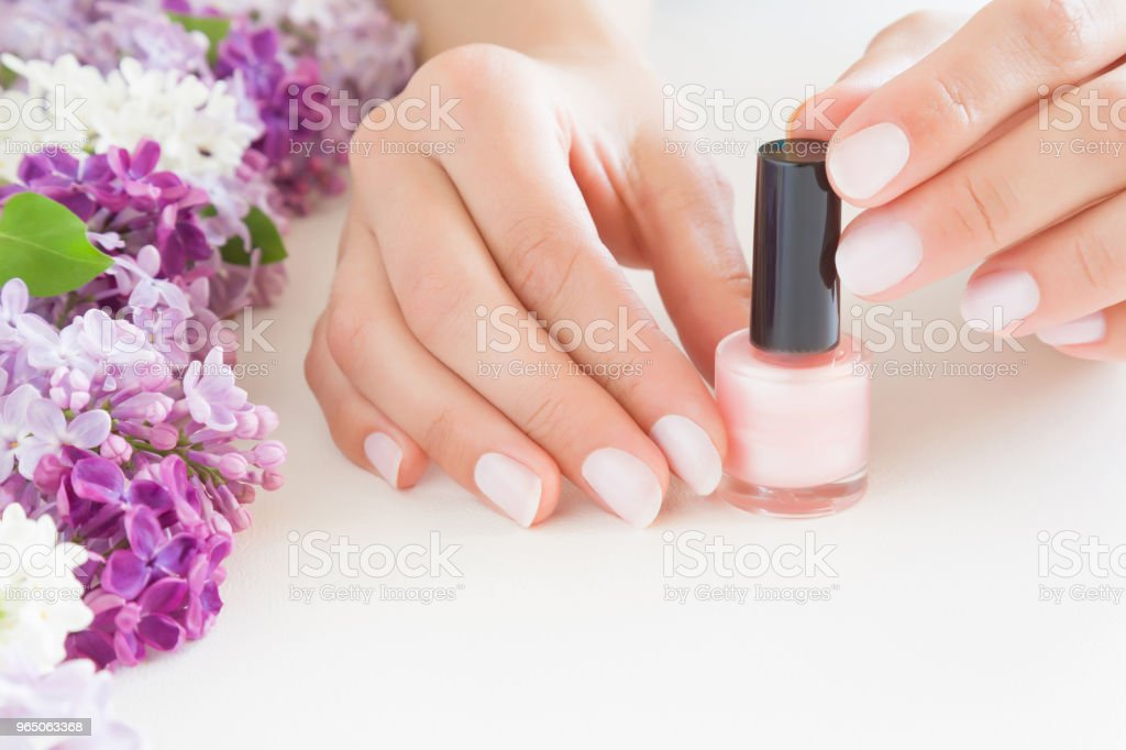 Young, perfect, groomed woman's hands with pink nail varnish bottle. Nails care. Manicure, pedicure beauty salon. Beautiful branches of lilac blossoms on white table. Colorful, fresh flowers. zbiór zdjęć royalty-free