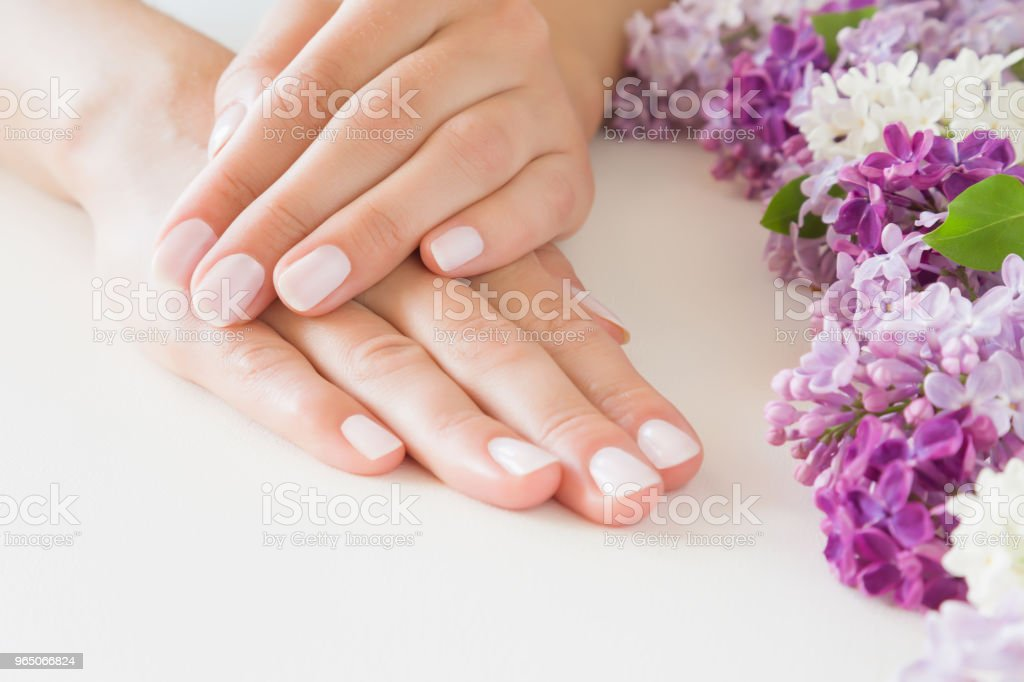 Young, perfect woman's hands with light pink nails on white table. Care about clean, soft, smooth skin. Manicure, pedicure beauty salon. Beautiful branches of lilac blossoms. Colorful, fresh flowers. zbiór zdjęć royalty-free