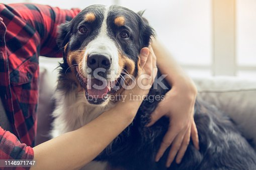 Young man with dog at home sitting on the sofa