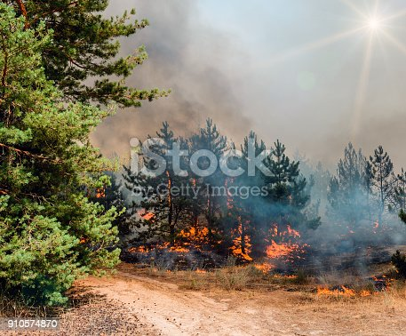 istock Young pine in flames of fire. Forest fire. Appropriate to visualize wildfires or prescribed burning 910574870