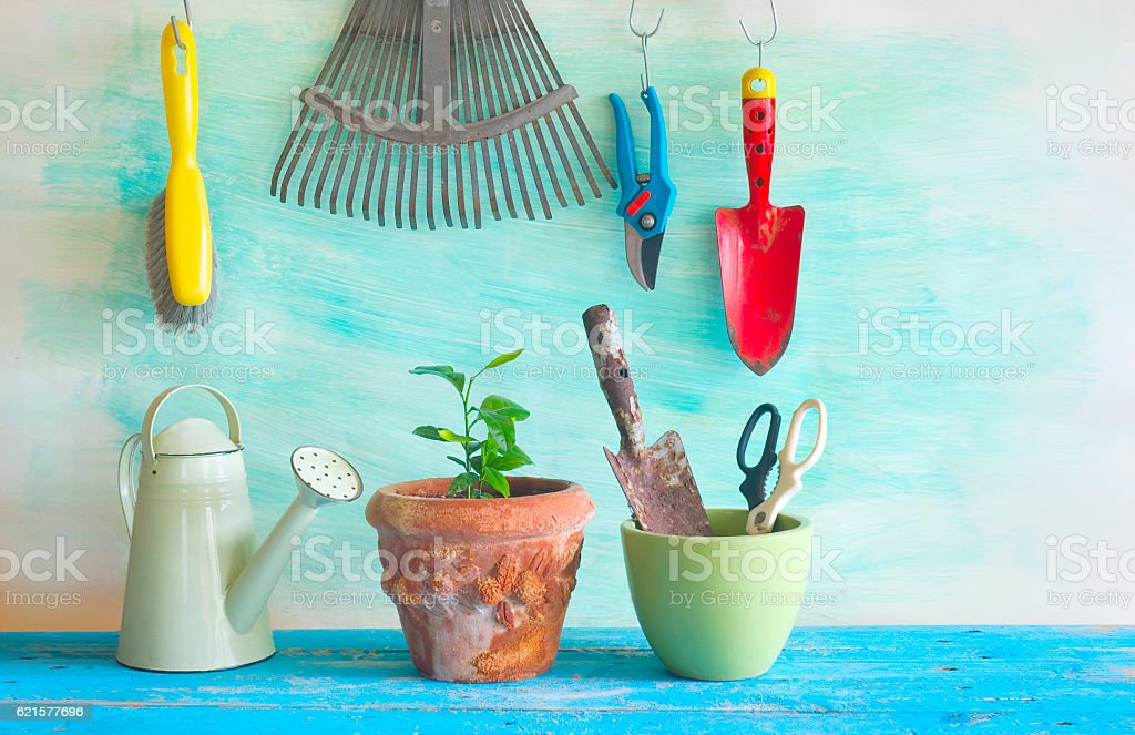 young plant and gardening tools photo libre de droits