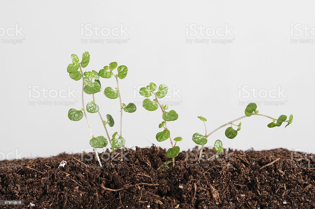 young plant begins to grow it the earth royalty-free stock photo