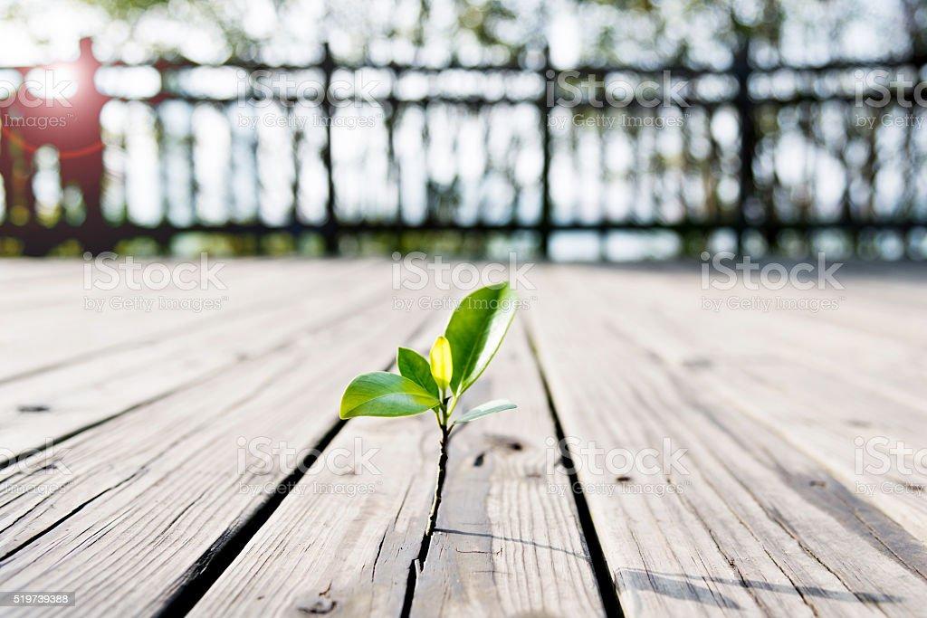 Junge Pflanze aus dem Holzboden - Lizenzfrei Anfang Stock-Foto