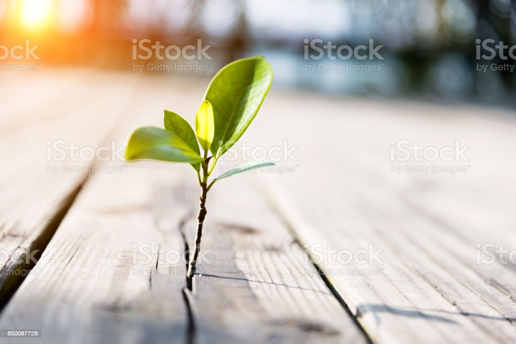 Young plant come from the wooden floor stock photo