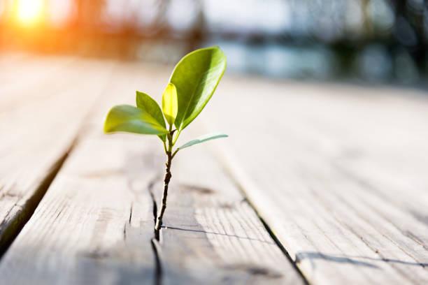 Planta jovem se do piso de madeira - foto de acervo