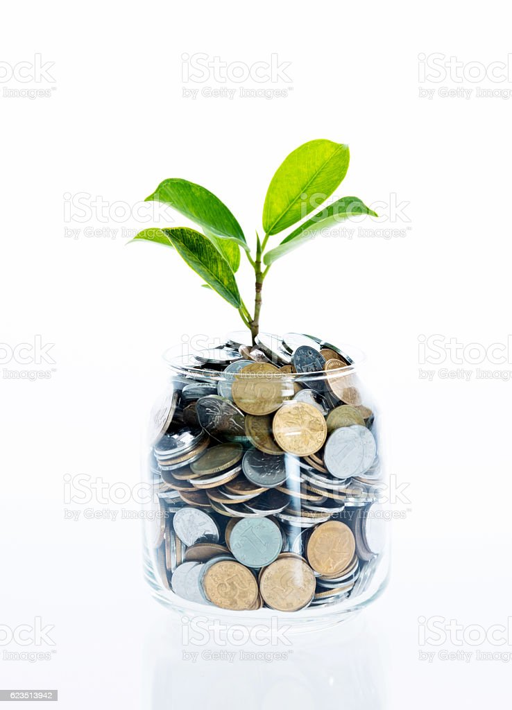 Young plant growing from coin jar stock photo