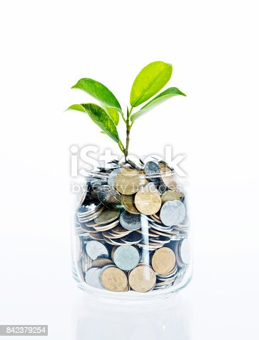 Young plant growing from coin jar isolated on white background, growing investments concept.
