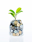 istock Young plant growing from coin jar 842379254
